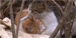 """Nghẹn ngào cảm động với cặp đôi """"Bên nhau trọn đời"""" phiên bản mèo"""
