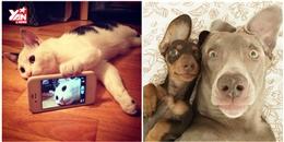 Cùng xem bọn thú cưng cũng biết tự dùng điện thoại để chụp ảnh selfie