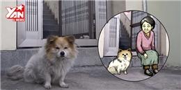 Nghẹn lòng với chú chó 3 năm đứng cửa đợi người chủ đã bỏ rơi mình