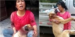 Thắt lòng chú chó bị cắt đứt cổ vẫn gắng gượng về nhìn chủ lần cuối