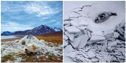 Bạn sẽ ước rằng mình chưa từng xem 18 bức ảnh về biến đổi khí hậu này