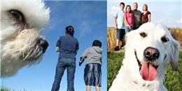 Khi cún yêu không chịu kiếp bị 'bỏ rơi' mà lao vào phá ảnh chủ nhân