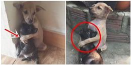 Sự thật sau cái ôm của đôi bạn cún: không hề tình cảm