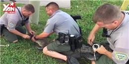 Đột nhập nhà dân, cá sấu bị cảnh sát còng 4 chân ngay tại trận