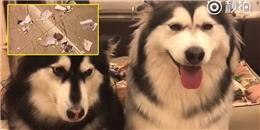 Bị phạt vì gặm nát sách, 2 chú chó làm mặt lố đến không thể nhịn cười