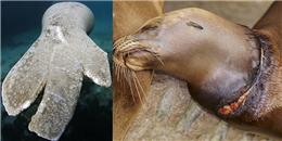 Điếng người trước nỗi đau mà con người gây ra cho các sinh vật biển