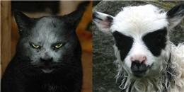 Khi động vật đóng vai chúa tể hắc ám