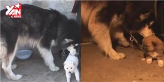 Vụ  bắt cóc  cún cưng kinh hoàng và cảm động nhất quả đất