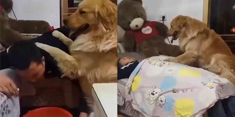 """Chăm sóc ông chủ chu đáo hơn cả bà chủ, chỉ có thể """"yêu tinh chó"""" này"""