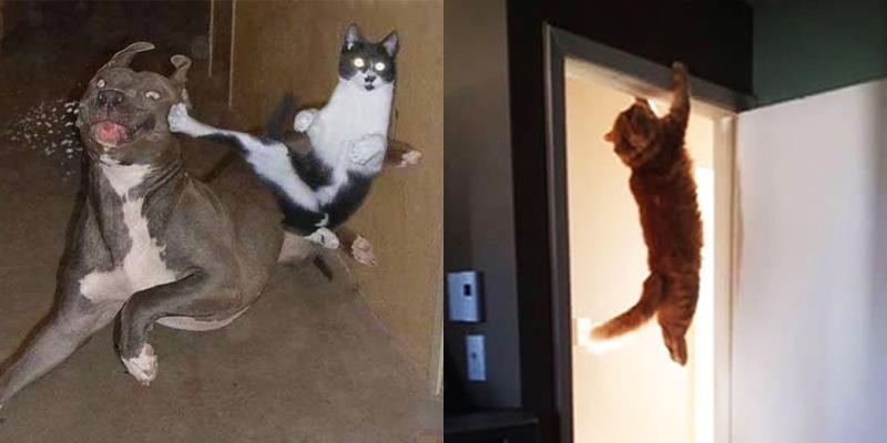 """Rụng tim với loạt ảnh """"Ninja mèo"""" cực kỳ đáng yêu"""