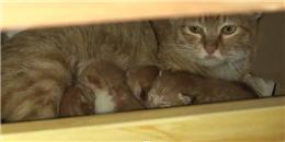 Đột nhập văn phòng để 'đẻ trộm', mẹ mèo bỉm sữa được tặng nhà mới