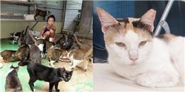 Người phụ nữ U50 suy dinh dưỡng vì nhịn ăn để nuôi 150 con mèo