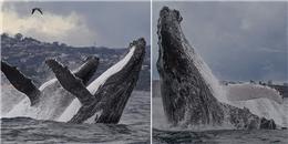 Choáng ngợp hình ảnh đôi cá voi nhảy khỏi mặt nước đẹp nhất thập kỷ
