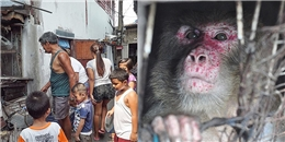 Xót xa với chú khỉ bị giam cầm suốt 25 năm trong chiếc 'hang' tăm tối
