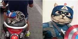 Đội mũ bảo hiểm ngồi xe máy, 'em' mèo này khiến ai cũng 'tan chảy'