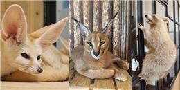 Cà phê động vật hoang dã gây tranh cãi tại Thái Lan
