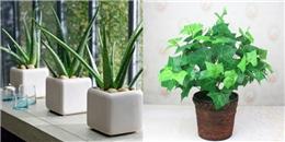 7 loại cây hút sạch bức xạ điện từ trong nhà cực hiệu quả