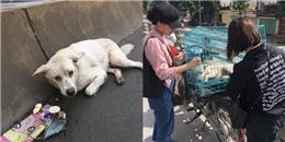 Chú chó bị xe đâm, lòng người và sự may mắn sót lại gây xúc động