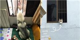 Lộ diện thân phận nàng husky làm CĐM ngỡ bị kẹt cả đầu vì mải hóng hớt