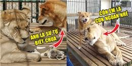 Vụ hoán đổi thân xác giữa gấu, chó và sư tử chấn động sở thú