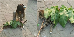 Bức ảnh đáng yêu nhất ngày: Cô bé lấy lá làm chăn cho em mèo đang ngủ