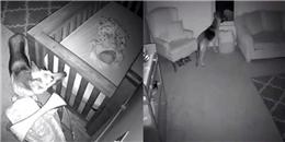 Đặt camera tại phòng con, bố mẹ thấy hành động lạ kì của chó cưng