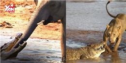 """Những con vật """"có võ"""", khiến cho cá sấu mất miếng mồi tươi"""