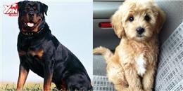 10 giống chó thông minh nhất thế giới khiến bạn ngạc nhiên.