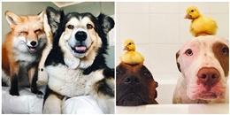 15 bức hình 'ngày ấy, bây giờ' chứng tỏ tình bạn của loài vật