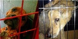Rơi nước mắt hình ảnh những chú chó khóc khi bị chủ nhân bỏ rơi