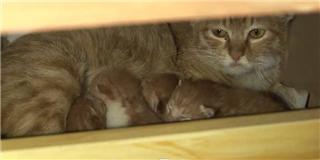Đột nhập văn phòng để  đẻ trộm , mẹ mèo bỉm sữa được tặng nhà mới