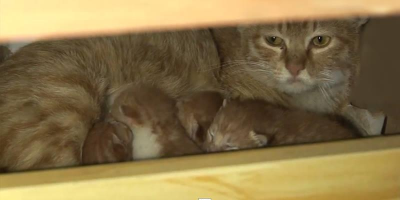 """Đột nhập văn phòng để """"đẻ trộm"""", mẹ mèo bỉm sữa được tặng nhà mới"""