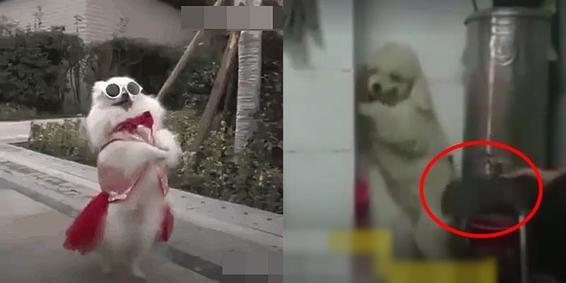 Sự thật về hình ảnh cún con đi bằng hai chân: Đầy tội ác và bạo lực