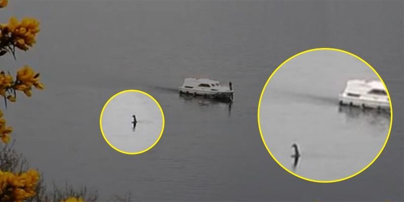 Không thể tin nổi với đoạn video quái vật hồ Loch Ness thật sự tồn tại