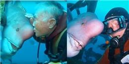 Thợ lặn già làm bạn với con cá xấu xí suốt 30 năm