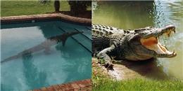 Suýt thành 'mồi ngon' cho cá sấu dài 2,4m trong chính bể bơi gia đình