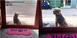 Sự thật phía sau câu chuyện chú chó bị bắt 3 năm quay về tìm chủ