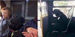 Bất ngờ với cô chó tự đón xe buýt đi công viên gây bão CĐM