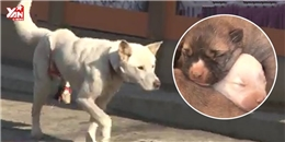 Bị kẻ ác trói hỏng chân, nàng chó mẹ vẫn kiên quyết sinh và chăm con