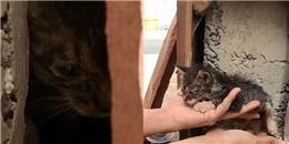 Nhói lòng trước cảnh mèo mẹ gào khóc gọi người cứu lấy con mình