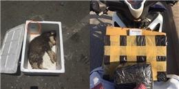 Rơi nước mắt hình ảnh chó con tội nghiệp chết ngạt trong thùng xốp