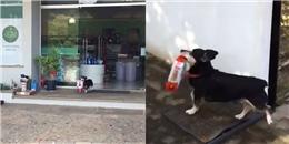 Bí mật đằng sau chú chó ngày nào cũng 1 mình đến cửa hàng mua thức ăn