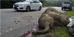 Chú voi con bị ô tô đâm chết nằm trơ trọi trên đường cao tốc
