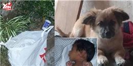 Khâm phục chú chó anh hùng cứu bé sơ sinh bị bỏ rơi trong túi nilon