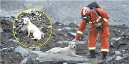 Chú chó 2 ngày không ăn, quyết tìm chủ bị chôn vùi trong vụ sạt lở đất