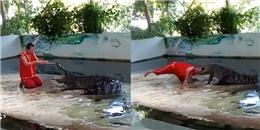 Khoảnh khắc đau đớn, cá sấu cắn đầu diễn viên xiếc