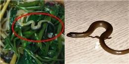 Tá hỏa phát hiện rắn xuất hiện trong bát mì, nhà hàng buộc đóng cửa