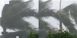 Clip: Gió giật kinh hoàng trong mưa bão ở miền Trung