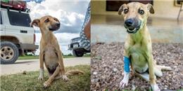 Đau lòng hình ảnh cô cún bị liệt hai chân phải lết hàng chục cây số