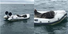 Soái ca hải cẩu trộm xuồng của ngư dân và phè phỡn leo lên ngắm cảnh